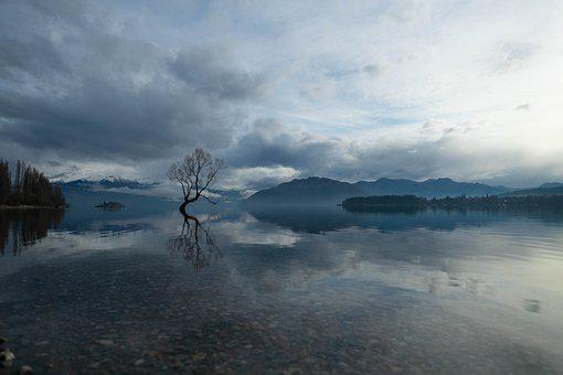 Wanaka Tree, Wanaka, Lake, Lone Tree, Kiwi, Scenery