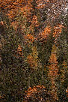 Trees, Autumn, Woods, Woodland, Leaves, Foliage