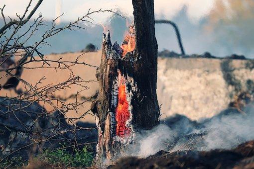 Tree Stump, Fire, Embers, Log, Forest Fire, Glow, Burn