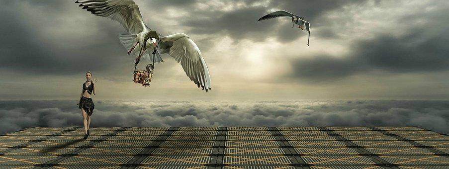Gulls, Girl, Camera, Flight, Lighting, Fantasy