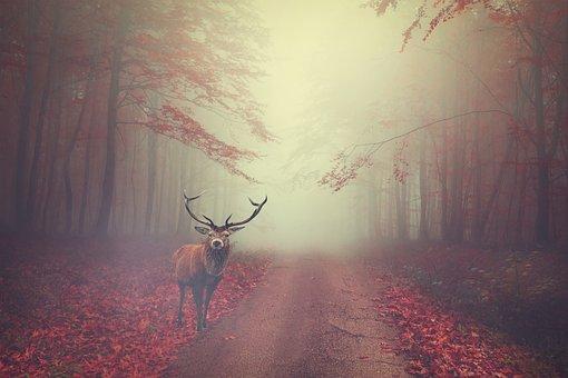 Deer, Forest, Road, Fog, Foggy, Mist, Animal, Wildlife