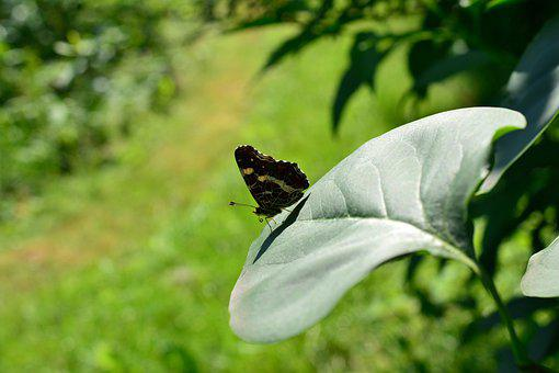 Butterfly, Insect, Striped Core Butterfly