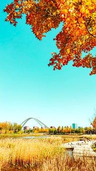 Autumn, Park, Tree, Bridge, Path, Pathway, Wooden Path