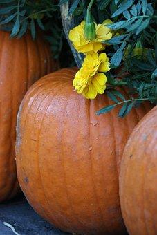 Pumpkins, Vegetable, Harvest, Pumpkin Patch, Produce
