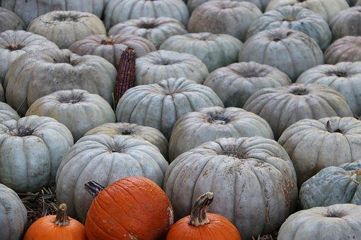 Pumpkins, Pumpkin Patch, Harvest, Produce, Squash