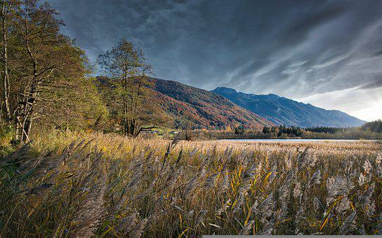 Mountains, Field, Lakeside, Reed, Grasses, Meadow
