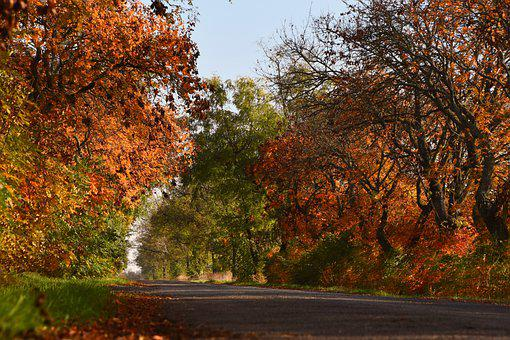 Autumn, Road, Avenue, Street, Pavement, Lane