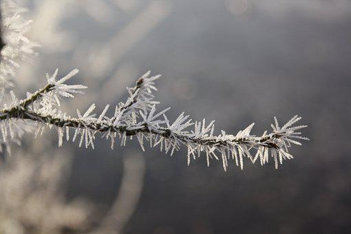 Shrub, Twig, Ice, Frost, Cold, Winter, Nature