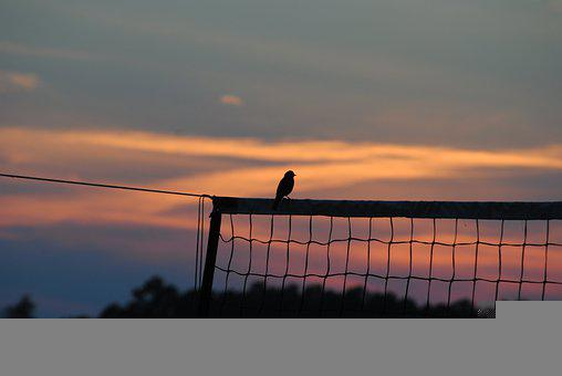 Bird, Sunset, Volleyball Net, Silhouette, Sky, Nature