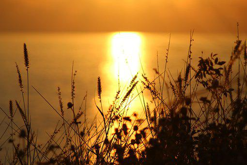Beach, Sunset, Cattails, Reeds, Reedy, Silhouettes