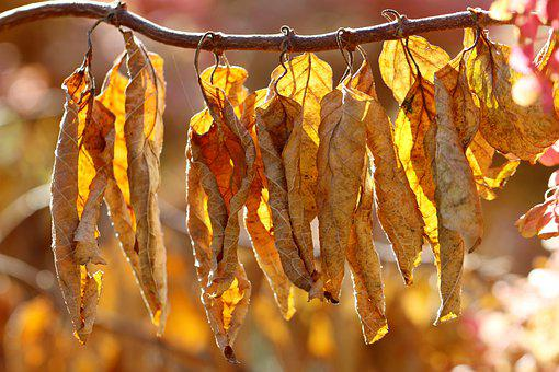 Leaves, Plant, Withered, Dry Leaves, Brown Leaves
