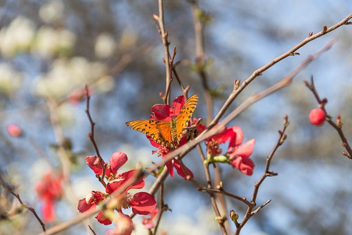 Butterfly, Monarch, Insect, Branch, Tree, Flowers