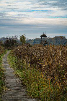 Trail, Park, Reed, Grasses, Wooden Path, Path, Footpath