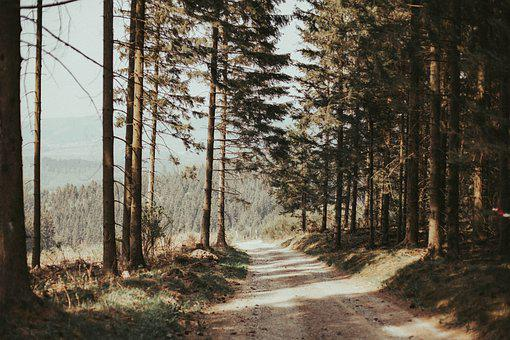 Forest, Trees, Pathway, Trail, Path, Road, Rothaarsteig