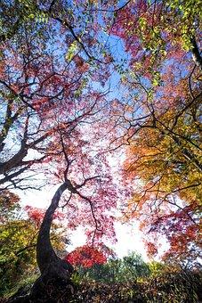 Trees, Tree Canopy, Autumn, Fall, Flora, Nature