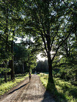 Woman, Pathway, Trail, Trees, Forest, Sun, Hiking