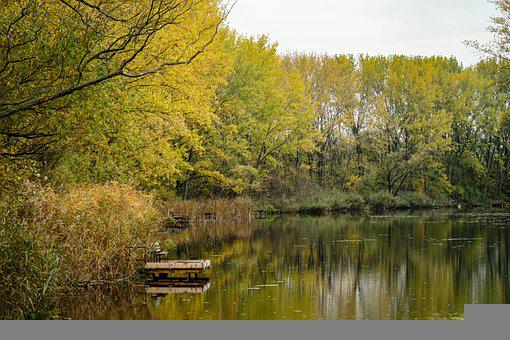 River, Trees, Nature, Water, Water Reflection, Woods