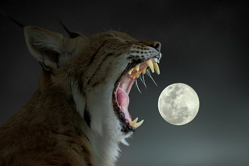 Lynx, Moon, Yawning, Surreal, Animal, Predator, Fangs