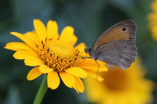 Butterfly, Flower, Pollen, Pollinate, Pollination