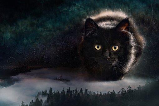 Cat, Forest, Giant, Giant Cat, Feline, Cat's Eyes