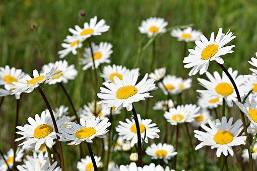 Flowers, Flower Meadow, Meadow, Garden, Wild Flowers