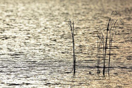 Water, Lake, Nature, Wave, Reeds, Green, Single