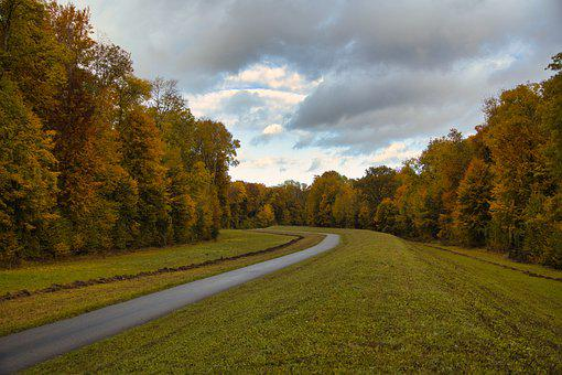 Cycle Path, Trees, Forest, Leaves, Autumn, Dam