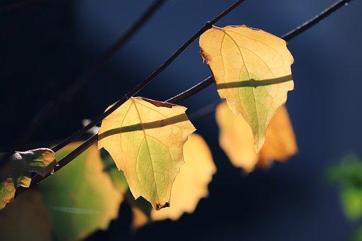 Leaves, Branch, Sunlight, Light On, Tree, Plant, Flora