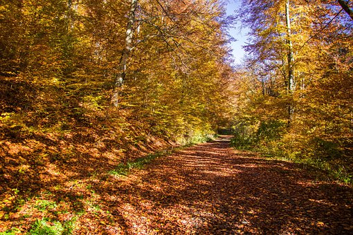 Forest, Road, Autumn, Fall, Trees, Woods, Leaves
