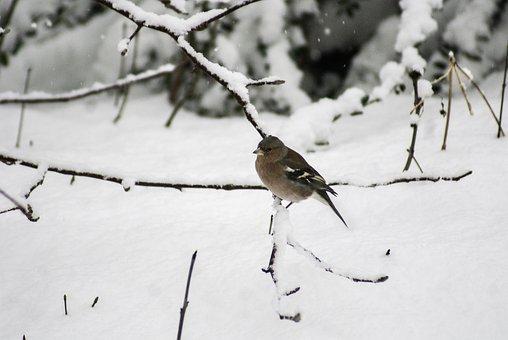 Bird, Winter, Snow, White, Cold, Animals
