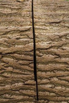 Tree, Bark, Oak, Like, Nature Of Wood, Saw, Sawn