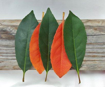Leaves, Fall, Fall Colors, Autumn, Fall Leaves, Colors