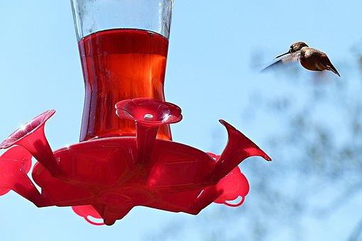 Hummingbird, Bird, Feeding Station, Flying, Fly