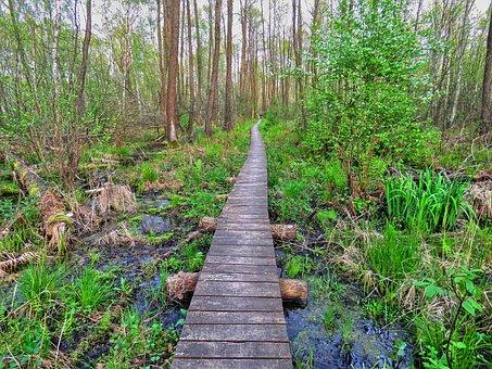 Forest, Footbridge, Wetlands, Marsh, Green, Spring, Way