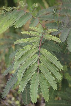 Fern, Green, Plant, Ecology, Environment, Leaves