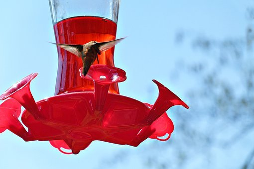 Hummingbird, Bird, Feeder, Avian, Tiny, Wildlife, Fly