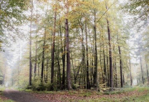 Forest, Palatinate, Fog, Morning, Nature, Mood