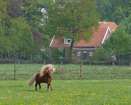 Horse, Horses, Pony, Shetlander, Whey, Nature, Grass