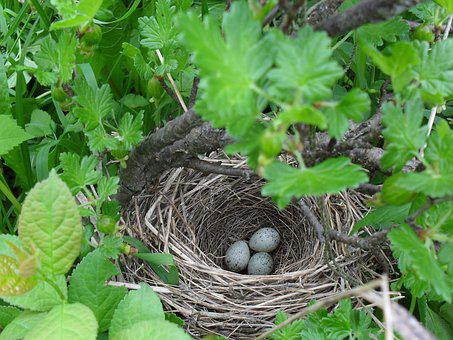 Jack, Eggs, Bush, Bird, Nature, Spring, In The Forest