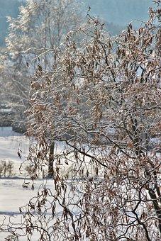 Snowy Pasture, Wintry, Snow, Ice And Snow, Willow Tree
