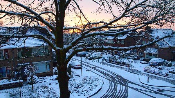 Oak, Oak Tree, Snowy, Snow, Sunrise, Winter, White