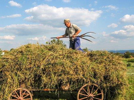 Labor, Farmer, Village, Work, Traditional, Hard Work