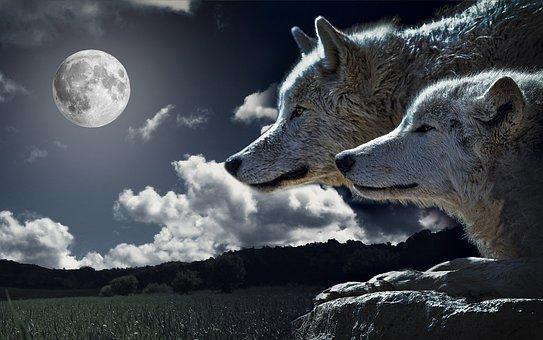 Wolves, Moon, Animals, Wildlife, Predators, Canine