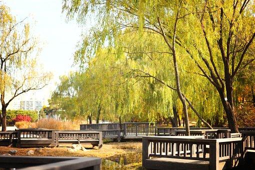 Park, Trees, Leaves, Autumn, Wood, Autumn Leaves