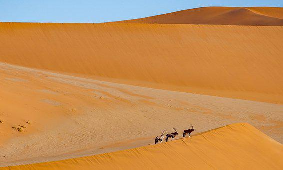 Desert, Dunes, Antelope, Animals, Mammals, Wildlife