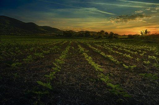 Farm, Field, Land, Soil, Plants, Saplings, Farmland