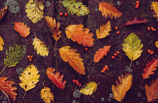 Autumn, Background, Leaves, Foliage, Autumn Leaves