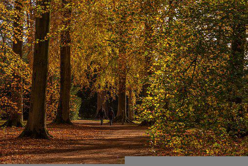 Autumn, Trees, People, Strolling, Walking, Park, Glade