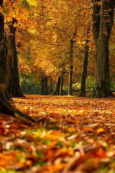 Autumn, Trees, Leaves, Foliage, Autumn Leaves