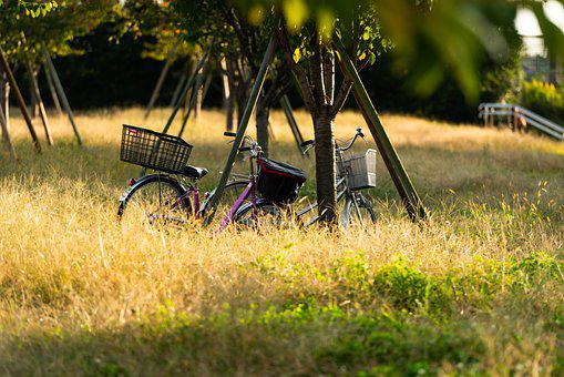 Bikes, Trees, Park, Grass, Bicycles, Vehicles, Pair